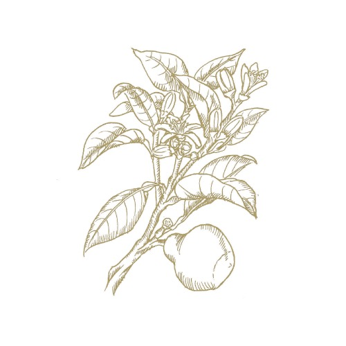 Bergamont (10ml)